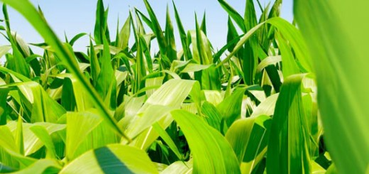 Productphoto_biofuel